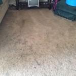 Plainfield-Dirty-Carpet