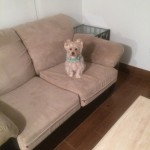 Plainfield-Sofa-Pet-Stain-Cleaning